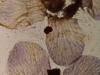 Stan Brakhage. Mothlight, 1963 (still). HD video without sound. 2:30 minutes. Courtesy of Marilyn Brakhage. Simon Dybbroe Møller's Filmklubben Hjerteblod / Lifeblood Film Club. Christian Andersen, Copenhagen