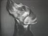 William Wegman. Man Ray Man Ray, 1978 (still). HD video with sound. 5:15 minutes. Courtesy of the artist and Electronic Arts Intermix (EAI), New York. Simon Dybbroe Møller's Filmklubben Hjerteblod / Lifeblood Film Club. Christian Andersen, Copenhagen