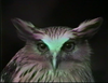 Chris Marker. An Owl is an Owl is an Owl, 1990 (still). HD video with sound. 3:23 minutes. Simon Dybbroe Møller's Filmklubben Hjerteblod / Lifeblood Film Club. Christian Andersen, Copenhagen, 2019