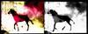 Malcolm Le Grice. Berlin Horse, 1970 (still). HD video with sound. 6:40 minutes. Courtesy of LUX. Simon Dybbroe Møller's Filmklubben Hjerteblod / Lifeblood Film Club. Christian Andersen, Copenhagen