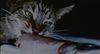Joyce Wieland. Catfood, 1969 (still). HD video with sound. 13:30 minutes. Courtesy of La Cinémathèque Québécoise. Simon Dybbroe Møller's Filmklubben Hjerteblod / Lifeblood Film Club. Christian Andersen, Copenhagen